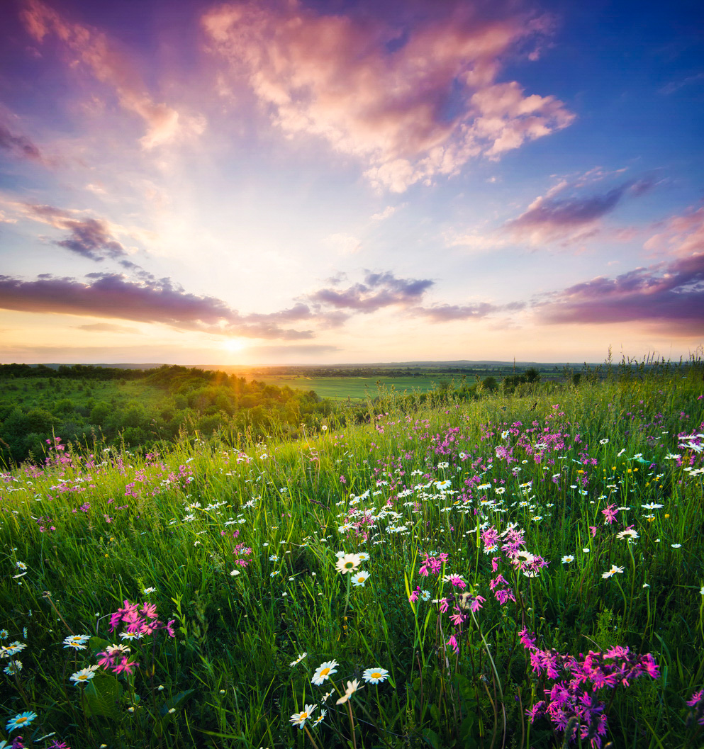 Flowers on the mountain field during sunrise. Beautiful natural landscape in the summer time